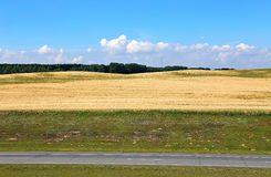 Landscape of wheat field and road Stock Images