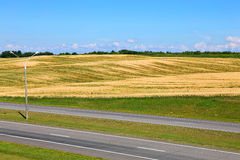 Landscape of wheat field and road Royalty Free Stock Photo