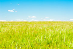 Landscape of a wheat field and sky Royalty Free Stock Photos