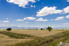 Landscape with wheat fields and cloudy sky Royalty Free Stock Photos