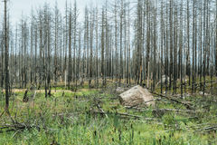 Landscape where nature is slowly recovering from a forest fire Stock Photos