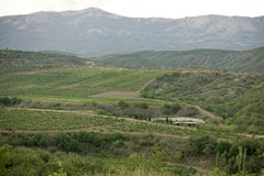 Landscape which vineyards, sky, rows of green bushes, are visibl Royalty Free Stock Images