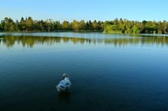 Landscape with a white duck Stock Photos