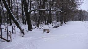 Landscape white snow park in winter in sanatorium with beautiful bridge by pond.  stock video