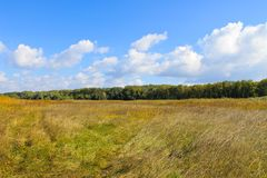 Landscape with wide meadow and green trees. Landscape with a wide meadow and green trees Royalty Free Stock Photography