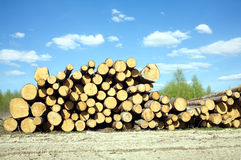 Free Landscape Width Stacked Pine Logs Royalty Free Stock Photo - 54351935
