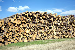 Landscape width stacked pine logs Stock Image