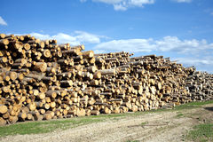 Landscape width stacked pine logs Royalty Free Stock Images