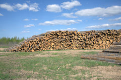 Landscape width stacked pine logs Royalty Free Stock Photography