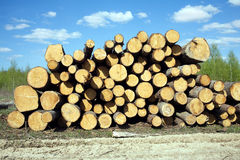 Landscape width stacked pine logs Royalty Free Stock Image