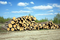 Landscape width stacked pine logs Royalty Free Stock Photos