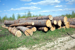 Landscape width stacked pine logs Stock Photography
