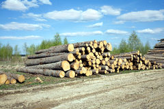 Landscape width stacked pine logs Stock Photos