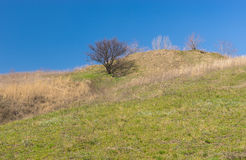 Landscape with wild apricot tree on a hill Royalty Free Stock Photos