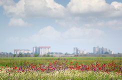 Landscape with wild flowers Stock Photo