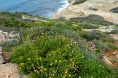 Landscape with wild flowers and herbs. Wild nature, landscape with blooming herbs stock image