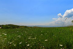 Landscape with wild flowers and sky Royalty Free Stock Photo