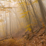 Landscape in wild foggy forest Stock Photography
