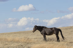 Landscape of wild horse Stock Images