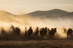Landscape of wild horses running at sunset with dust in background. royalty free stock photography
