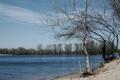 Trees in water river. Scenic current of river in the spring. Stock Images