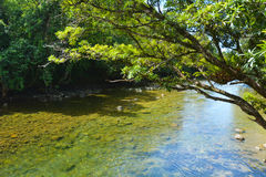 Landscape of a wild stream in Daintree National Park Queensland Stock Image