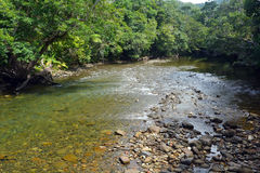 Landscape of a wild stream in Daintree National Park Queensland Stock Photos