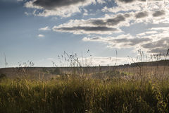 Landscape of wild verge with farm and blue sky in background Royalty Free Stock Photo