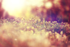 Landscape wild white flowers in field Stock Images