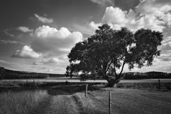 Landscape willow tree Royalty Free Stock Photography