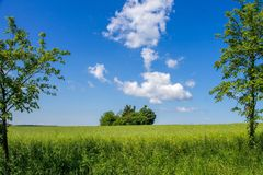Landscape window, idyll with green meadow and wide sky. Centered with trees stock photography