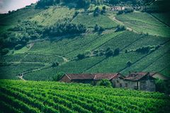 Landscape of wine fields and country house near the hills. Nature wallpaper background of green wine fields with old house and hills on the background. No royalty free stock photography