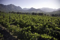 Landscape of the wineries Stock Images