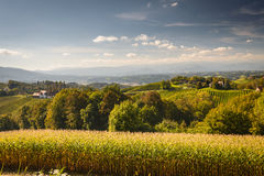 Landscape. With wineyard on an Southern Styria countryside,Austria Royalty Free Stock Photos