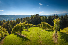 Landscape. With wineyard on an Southern Styria countryside,Austria Royalty Free Stock Image