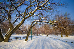 Landscape in winter. Golf courses are covered in snow Stock Photo