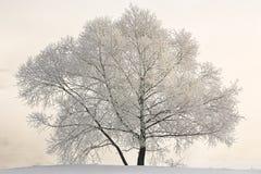 landscape winter Στοκ Φωτογραφία