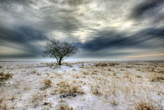 Landscape winter Royalty Free Stock Image