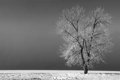 landscape winter Στοκ εικόνες με δικαίωμα ελεύθερης χρήσης