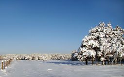 Landscape of winter. With snow, pines and blue sky royalty free stock photo