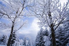 Landscape winter Royalty Free Stock Photo