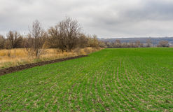 Landscape with winter crops field in central Ukraine Royalty Free Stock Images