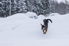 Landscape of winter and dog Royalty Free Stock Photo