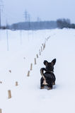 Landscape of winter and dog Stock Image