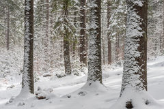 Landscape with Winter Fairy Tail Forest Royalty Free Stock Image