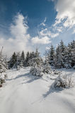 Landscape with Winter Fairy Tail Forest Royalty Free Stock Photography