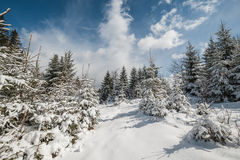 Landscape with Winter Fairy Tail Forest Stock Photography