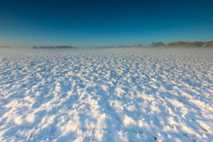 Landscape with winter field under snow at sunrise Royalty Free Stock Photography
