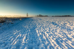 Landscape with winter field under snow at sunrise Royalty Free Stock Photos