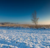 Landscape with winter field under snow at sunrise Stock Photography